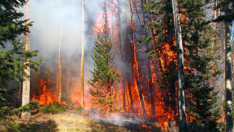 Использование Сирен при Лесных Пожарах