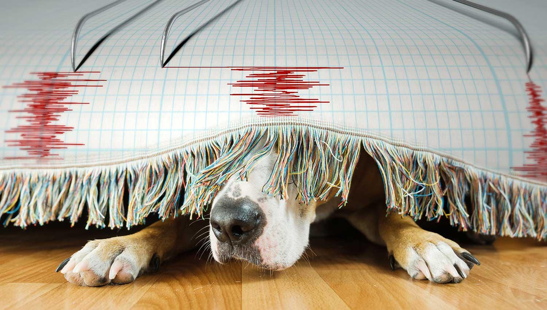 Могут ли животные чувствовать надвигающееся землетрясение?